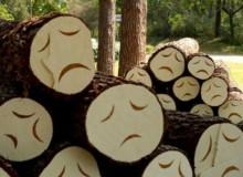 Запахло жареным и наломать дров